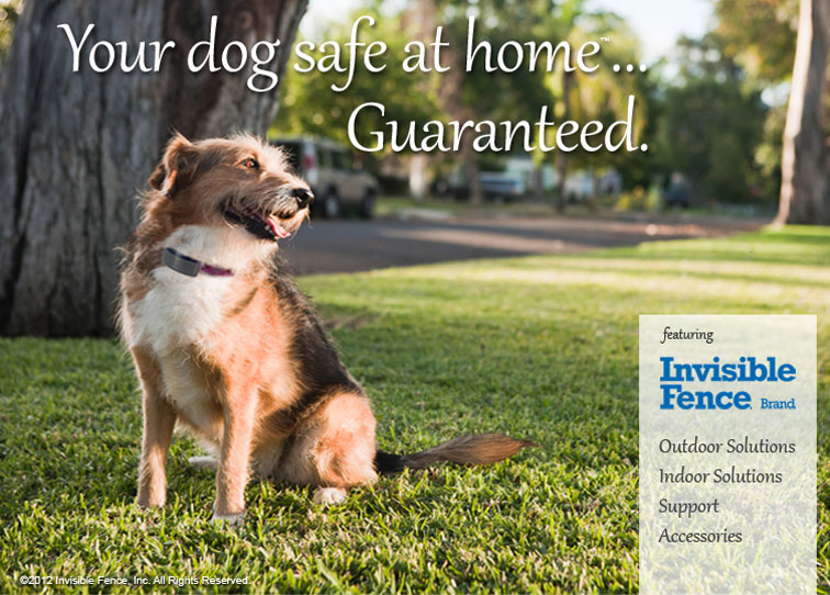 Invisible Fence Pet Containment Dog Obedience Training