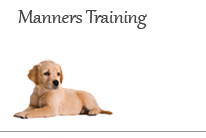Manners Dog Obedience Training