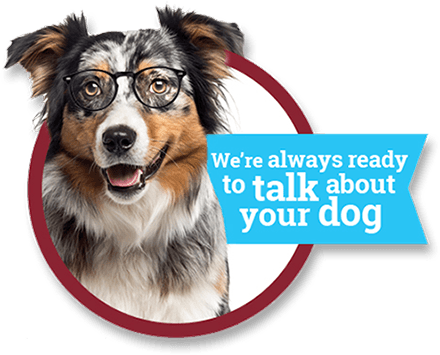 We're always ready to talk about your dog