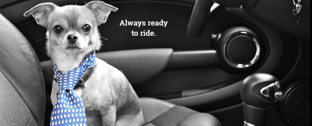 Pet Travel Products at Canine Company