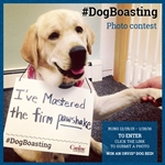 Introducing the #DogBoasting Pet Photo Contest!