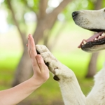 Are You a Responsible Dog Owner?  Test Yourself with this Quiz.