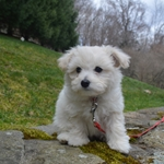 Let's Go for a Walk: Teaching Puppy to Wear a Leash
