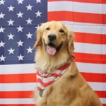 Don't Let Your Dog Become a 4th of July Runaway