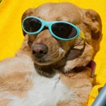 Health & Safety Tips for Summer's Dog Days