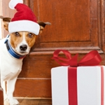 Perfect Presents for Pups and the People Who Love Them