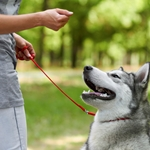 Trouble Training your Dog?  You May Have Fallen for One of these Myths