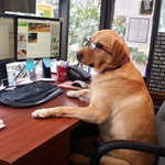 Dos and Don'ts for Bringing your Dog to Work