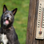 Important Safety Tips for Summer's Dog Days