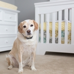 Expecting?  Here's How to Prepare your Dog for Baby's Arrival