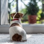 Four Tips to Help your Dog Beat the Back-to-School Blues