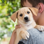 How to Make the Perfect Pet Match during Adopt-a-Shelter-Dog Month