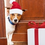Perfect Presents Under $30 For Dogs And Dog Lovers