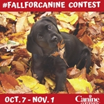 Instagram Fall Pet Photo Contest!!