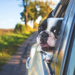 Moving With Pets? We Have the Experts' Advice to Do It Properly