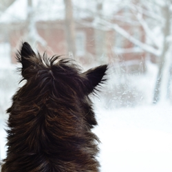Does Your Dog Have the Winter Blues? Try These Boredom Busters!