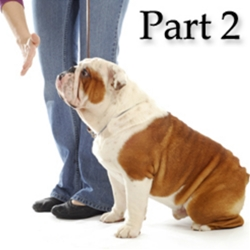 More Myths and Misconceptions About Dog Obedience Training