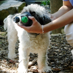Canine Company Donates Pet Oxygen Masks to 60 More Communities!