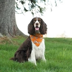 Insect Shield Dogs & Bones Bandana- Orange