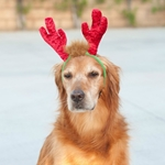 Holiday Antler Headband | Canine Company