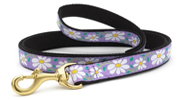 Up Country Daisy Lead