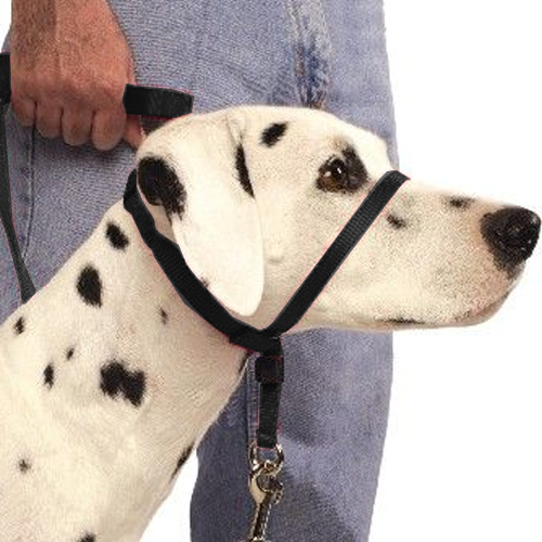 how to put on a gentle leader collar